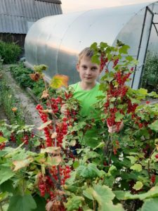 конкурс царство ягода всероссийский для детей с дипломом