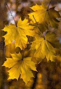 осень фотоконкурс