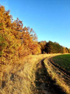 фотоконкурс осень всероссийский и международный