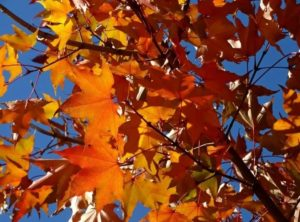 фотоконкурс осень