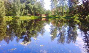 конкурс лето всероссийский международный с дипломами